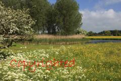 River Nenen valley, Peterborough, Cambridgeshire