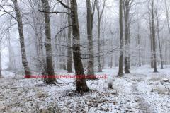 Hoare frost winter scene, Castor Hanglands Woods, SSSI English Nature National Nature Reserve, Cambridgeshire,  England; UK