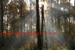 Summer Woodland, Lyndhurst, New Forest, England