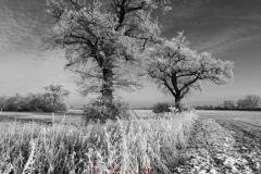 Hoare frost winter scene, Fenland fields near Ramsey town, Fenland, Cambridgeshire, England; Britain; UK