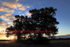Sunrise over Oak Tree (Quercus robur), Autumn colours, Fenland area of Cambridgeshire, England, Britain, UK,
