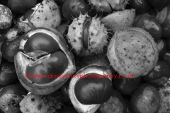 Conkers patern